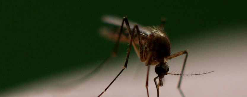USAID Assisting Barbados In Mosquito Fight
