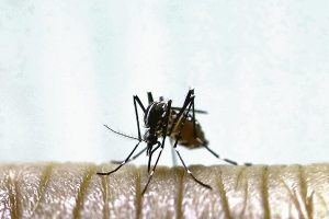 Significant increase of dengue recorded in St Vincent